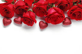 valentines day roses s day heart roses flowers white background