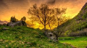 download wallpaper 1366x768 trees grass landscape hdr laptop