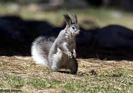 New Mexico wildlife images Chama new mexico jpg