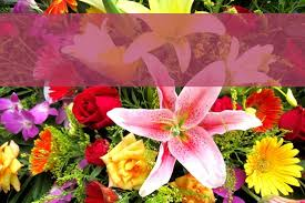 flower places flower delivery places westridge florist toowoomba
