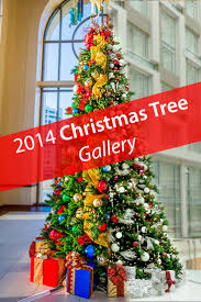 2014 christmas trees gallery