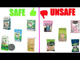 Best Bedding For Rats Safe U0026 Unsafe Litters For Rats Youtube