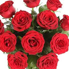 How Much Is A Dozen Roses A Dozen Red Roses Giftwrap Delivered Next Day