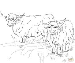 scottish highland cattle coloring page free printable coloring pages