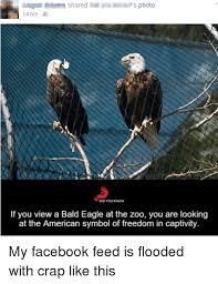 America Eagle Meme - bald eagle freedom meme eagle best of the funny meme