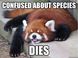 Confused Dog Meme - bear cat dog raccoon memes quickmeme