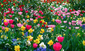 image of spring flowers spring flowers background
