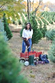 hunter christmas tree farm part 36 gorgeous christmas tree farm