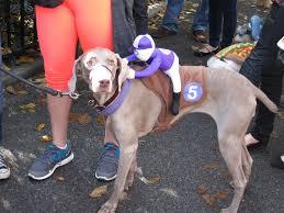horse jockey halloween costume top 5 adorable pet costumes this year u0027s halloween