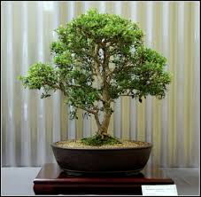 native plants canberra 02 large jpg