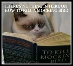 To Kill A Mockingbird Cat Meme - how to kill a mockingbird funny stuff pinterest grumpy cat