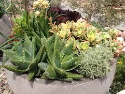 concrete low bowl planters creation landscape supplies