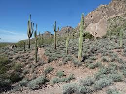 Arizona Google Maps by Gold Canyon Google Earth Map Mtbr Com