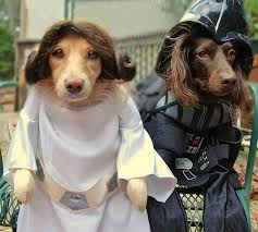 Star Wars Dog Halloween Costumes 10 Cutest Funniest Dog Halloween Costumes Dealwagger