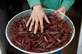 u n urges eating insects 8 popular bugs to try