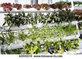 plant your home garden try hydropnics