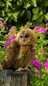 416 best beautiful birds images on pinterest beautiful birds