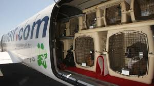 after 74 deaths in a decade delta bans pets from being checked