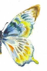 best 25 butterfly drawing ideas on pinterest papillion