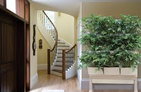 indoor green wall with well made modern arrangement plant design