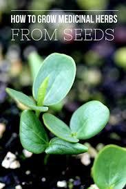 Herb Grower S Cheat Sheet 332 Best Garden Herbs Medicinal Edible Plants Mushrooms