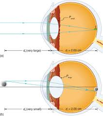 Picture Of Eye Anatomy Physics Of The Eye Physics