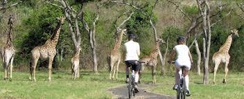 gafunkyfarmhouse this n that thursdays animal themed gafunkyfarmhouse this n that thursdays luxury safari living for