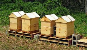 How To Make A Top Bar Beehive The Best Ventilated Gabled Roof Honey Bee Suite