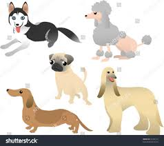 afghan hound and poodle vector cute poodle pug husky dachshund stock vector 25751212