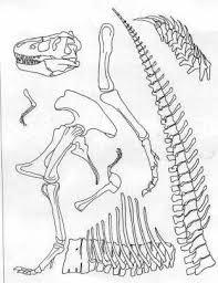 pieces of tyrannosaurus skeleton dinosaurier pinterest
