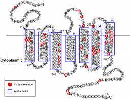 signal transmission through the cxc chemokine receptor 4 cxcr4