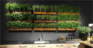 how to grow a herb garden indoors detailed instructions