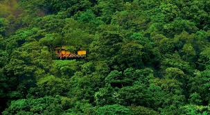 Cool Tree Houses 7 Best Tree Houses In India Tree House Resorts In India Tripoto