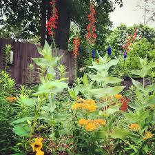 backyardbiodiversity on topsy one