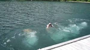 Montana snorkeling images Fourple dive into flathead lake jpg