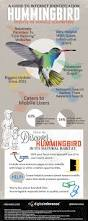 a guide to google hummingbird infographic relevance