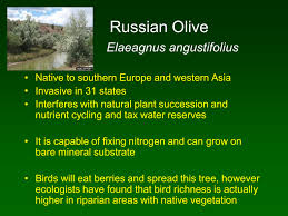 native plant definition ppt video online download