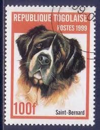 257 best st bernard dogs in photography images on