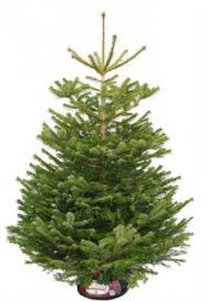 tree shopping where and what to buy best real and