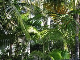 palm tree landscape placement of palms palm garden design