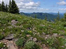 Oregon vegetaion images Mountain plants of the western cascades home jpg