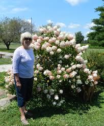 spirit halloween rockford il prairie rose u0027s garden gbbd mid august doldrums