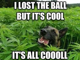 Pot Memes - 4 20 humor the best weed jokes and memes for 4 20