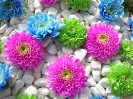 Flower Pictures Colourful Flowers Wallpaper Best Hd Wallpaper
