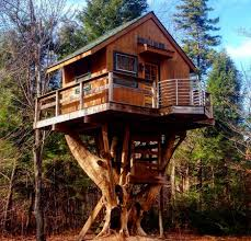 images of tree houses ideas best house design