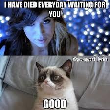 Grumpy Cat Coma Meme - fresh grumpy cat coma meme 1000 ideas about grumpy cat frozen on