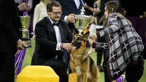 what is the dog show on thanksgiving today orange room video clips u0026 interviews from the today show