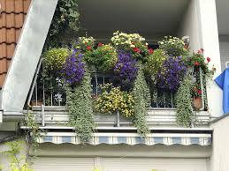 garten balkon dem als sichtschutz balkon pflanzen im garten oder auf dem hohe