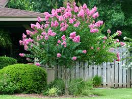 small ornamental trees for small gardens cori matt garden
