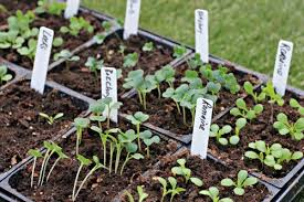 mavis garden blog now is the time to plant your fall vegetable